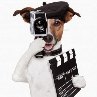 dogd-1